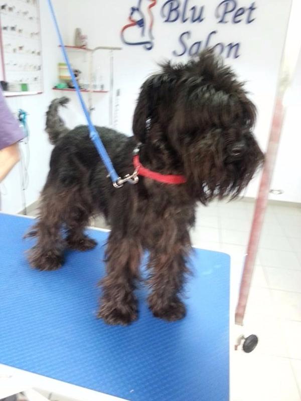 Blupet Salon Pet Salon Frizerie Canina Acreditata Tuns Caini