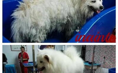 pet grooming bucuresti